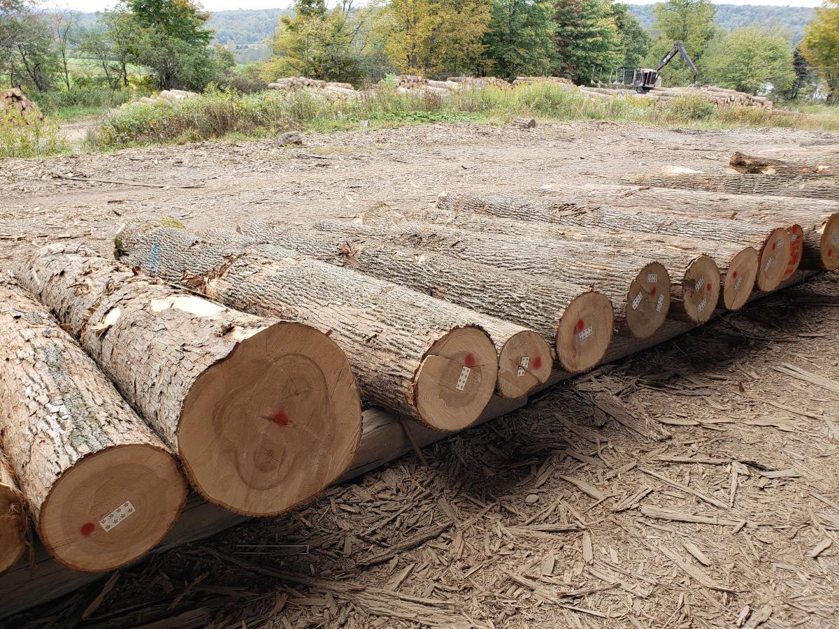 ash export logs