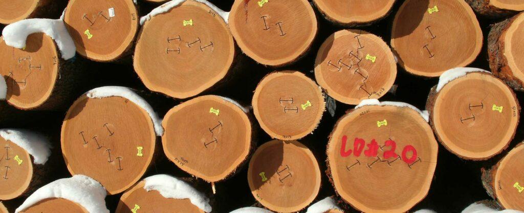cherry export logs