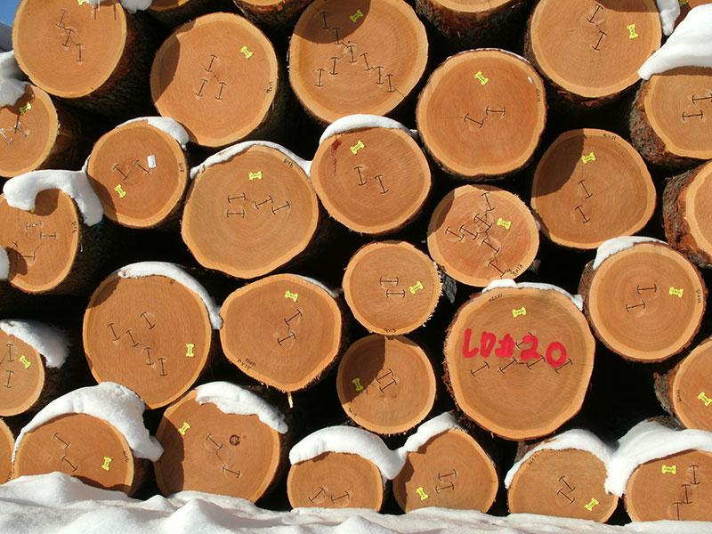 American Black Cherry logs