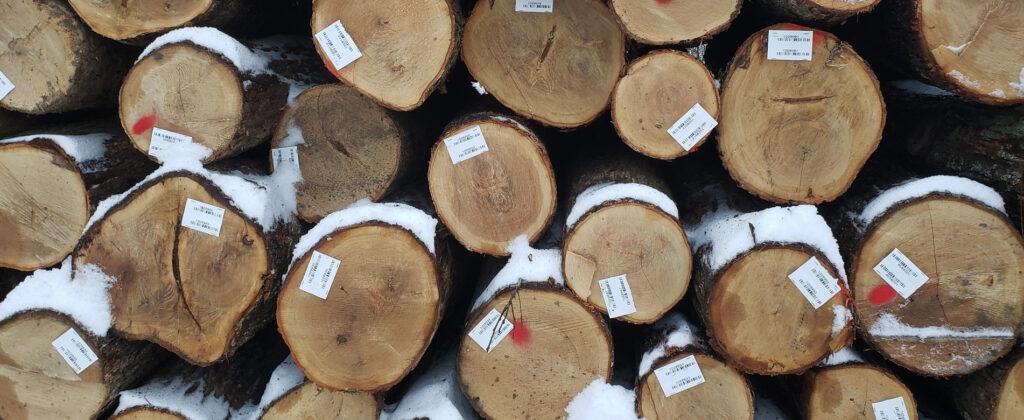 white oak export logs